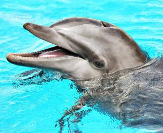 """Каталог. Обои половые. Наливной пол """"Дельфины""""."""