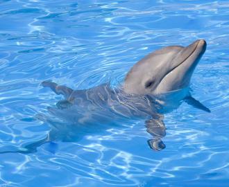 Каталог. Линолеум Дельфины