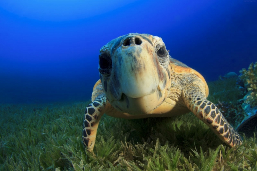 Фото черепахи близко