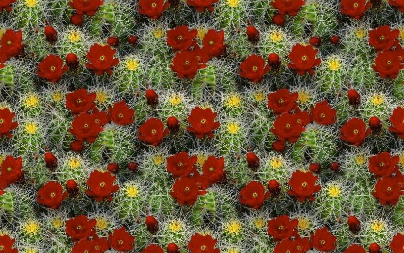 """3d обои для пола  """"Цветущие кактусы"""" купить"""