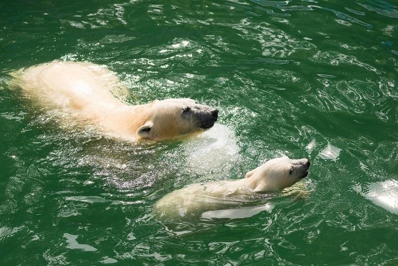 """3d обои для пола """"Белые медведи в воде"""""""