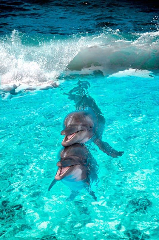 """Обои для пола """"Два дельфина, волна"""". Наклейка, печать для наливного пола в интерьере №4"""