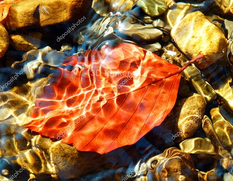 """Линолеум с рисунком """"Осенний лист, вода"""" купить"""