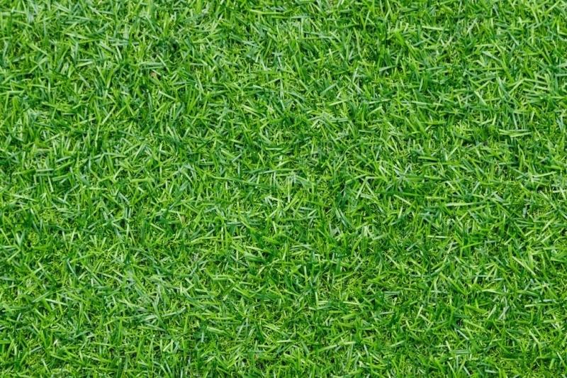 """Линолеум с рисунком """"Густая трава"""""""