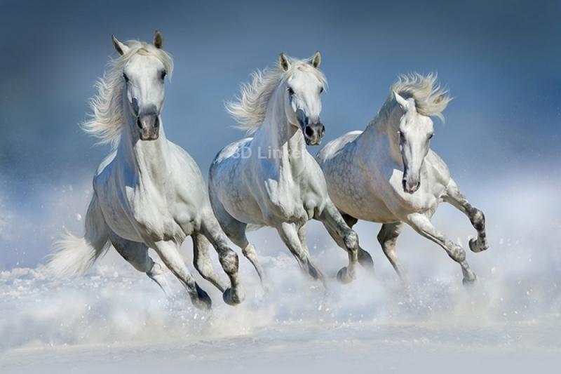 """Фотообои """"Три белых скакуна"""""""