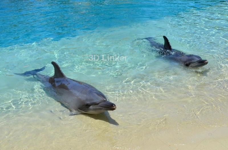 """Обои для оклейки пола """"Два дельфина, берег"""" купить"""