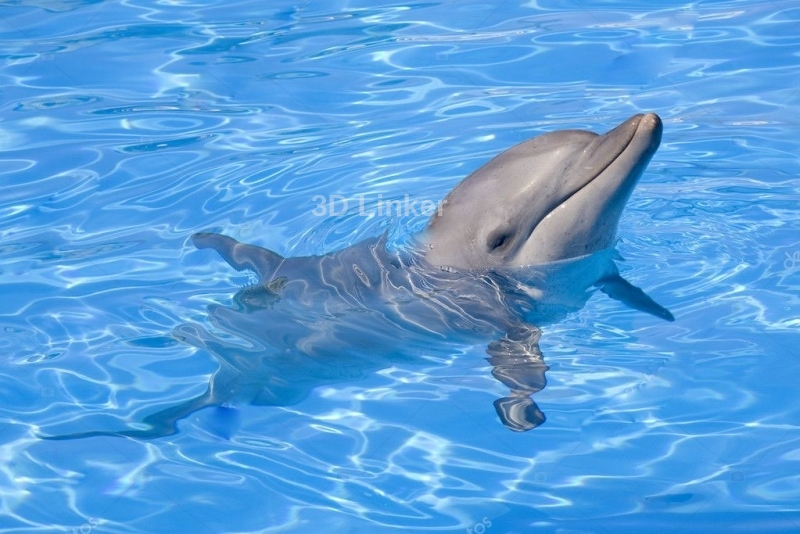 """Обои для оклейки пола """"Дельфин, голубая вода"""" купить"""