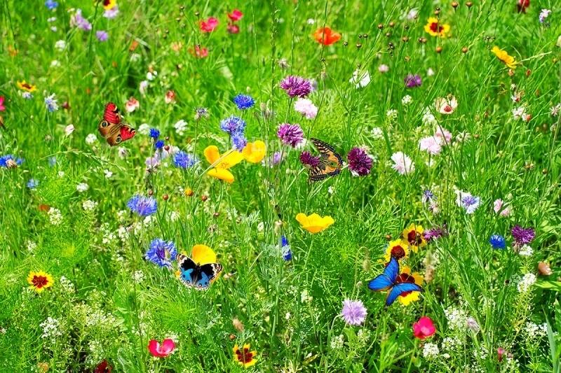 """Линолеум на веранду """"зеленая трава, бабочки, цветы"""" в интерьере №3"""