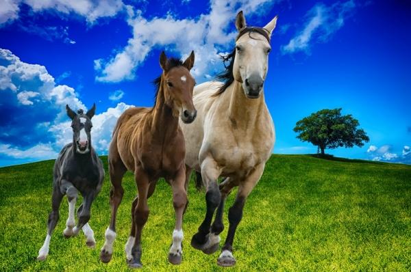Фотообои лошади