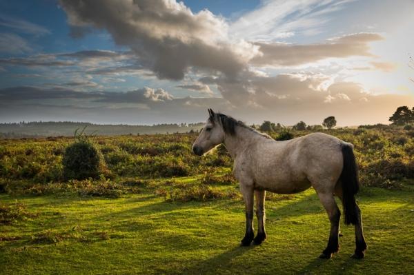 "Фотообои ""Лошадь на лугу"""