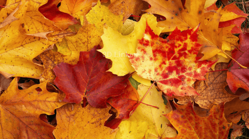 """Линолеум с рисунком """"Осенние листья"""" купить"""