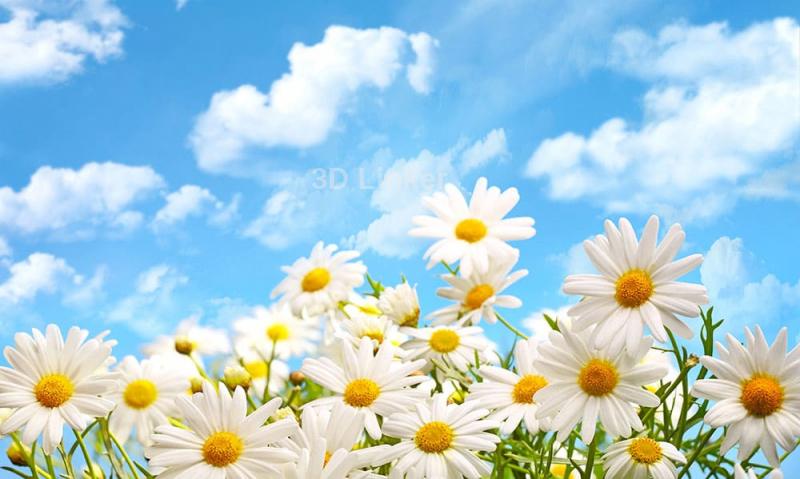 """Фотообои купить """"Ромашки, голубое небо, белые облака"""""""