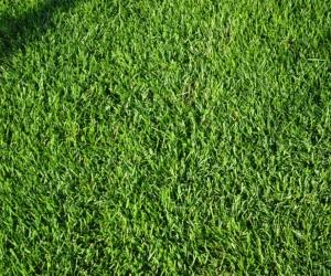 """Линолеум с рисунком """"Зеленая травка"""" Купить"""