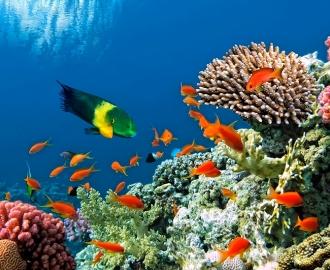 """Плитка с изображением """"Дно океана, рыбки"""". Фотопечать на плитке."""