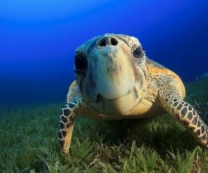 """Плитка с изображением """"Милая черепаха"""""""