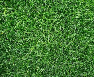 """Линолеум с рисунком """"Высокая зеленая трава"""" купить"""