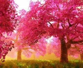 """Фотообои на стену купить """"Розовый лес"""""""