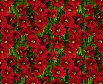 """Линолеум с рисунком """" Цветы Калибрахоа красные"""" купить"""