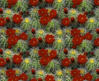 """Линолеум с рисунком """"Цветущие кактусы"""" купить"""