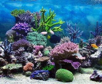 """Плитка с рисунком """"Дно океана, кораллы"""""""