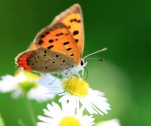 """Плитка с изображением """"Бабочка на цветке"""""""