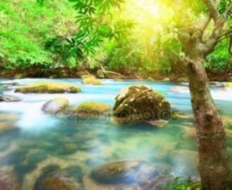 """Фотообои на стену купить """"Пейзаж, голубая вода, дерево"""""""