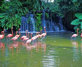 """Фотообои на стену купить """"Водопад, Розовые фламинго"""""""