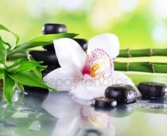 """Фотообои на стену купить """"Орхидея и ветки бамбука"""""""