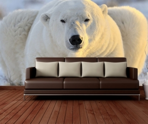 """Фотообои """"Белый медведь Отдых"""""""