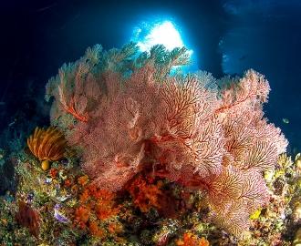 """Керамическая плитка с изображением """"Кораллы под водой"""""""