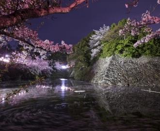 """Фотообои на стену купить """"Япония, парк-ревьера, ночь"""""""