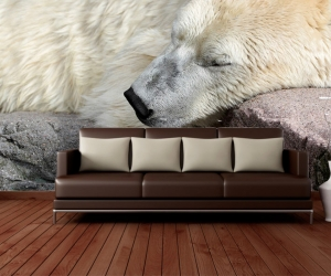 "Фотообои ""Белый медведь Сон"""