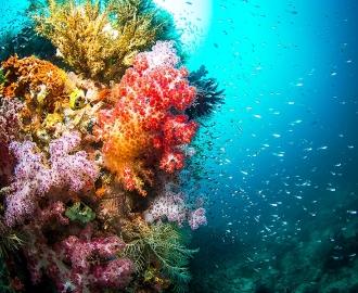 """Плитка с изображением """"Дно океана, кораллы, лучи солнца"""". Фотопечать на плитке."""