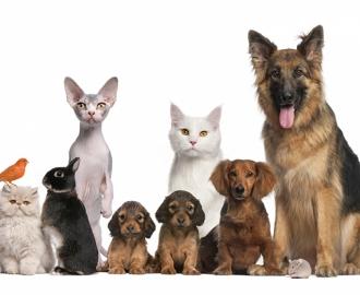 """Фотообои """"Собаки и кошки"""""""