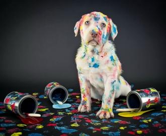 """Фотообои """"Собака и краски"""""""