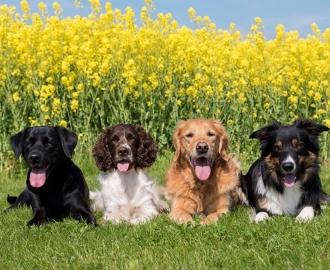 """Фотообои """"Четыре Собаки"""""""