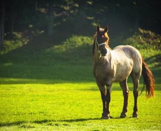 """Фотообои купить """"Лошадь"""""""