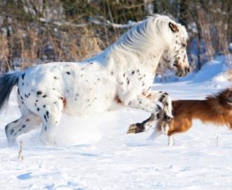 """Фотообои """"Белая лошадь"""""""