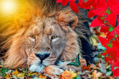 """Фотообои на стену животные """"Лев, листья, бабочка"""""""