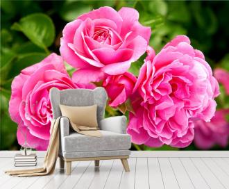 """Фотообои """"Три розовые розы, крупным планом"""""""