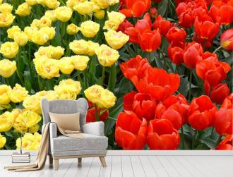 """Фотообои купить """"Поле тюльпанов, желтые и красные"""""""