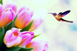 """Фотообои купить """"Розовые тюльпаны, колибри"""""""