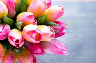 """Фотообои купить """"Розовые тюльпаны на голубом фоне"""""""