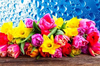 """Фотообои купить """"Тюльпаны розовые, желтые, голубой фон, капельки воды"""""""