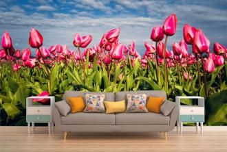 """Фотообои купить """"Розовые тюльпаны, небо, облака"""""""