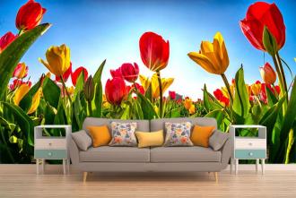 """Фотообои купить """"Тюльпаны красные, голубое небо, яркое солнце"""""""