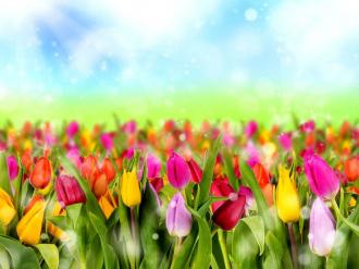 """Фотообои купить """"Тюльпаны, горизонт, голубое небо, облака"""""""