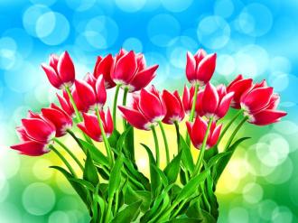 """Фотообои купить """"Букет тюльпанов на голубом фоне"""""""