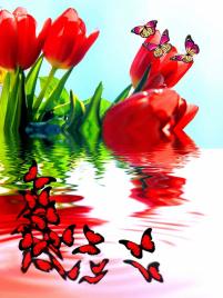 """Фотообои купить """"Тюльпаны красные, бабочки, отражение в воде"""""""