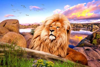 "Фотообои на стену животные ""Лев, закат, камни, вода, птицы"""